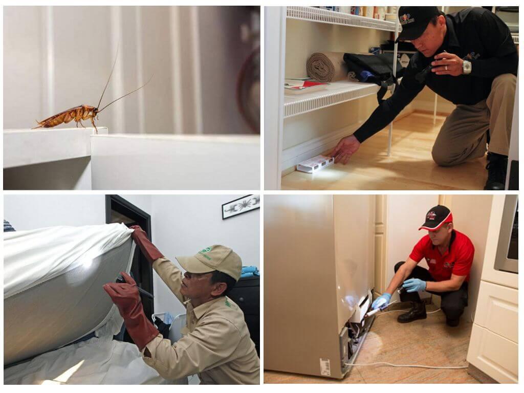Профессиональная дезинфекция от тараканов